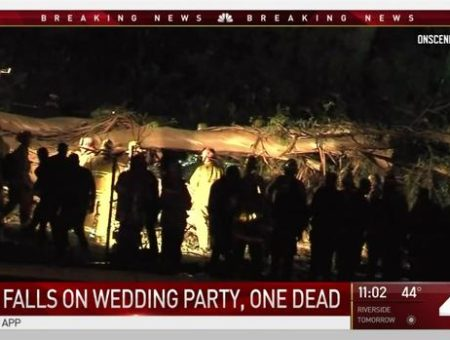 Tree falls at CA wedding party; 1 dead